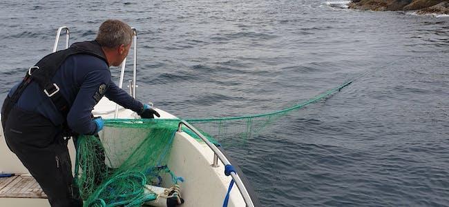 Statens naturoppsyn avdekkjer i samarbeid med politiet, Fiskeridirektoratet og Kystvakta, betydeleg tjuvfiske. Her blir eit ulovleg garn inndrege.