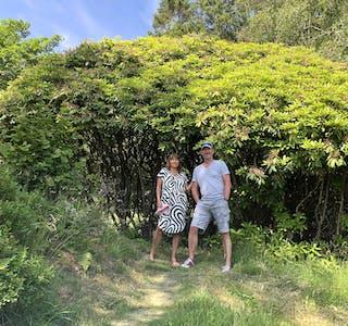 I fjor måtte Torill og Henrik Winsnes fram med hagesaksa for å stamma opp rododendronen fordi den hadde est seg ut og lagt seg over gangstien ned til hytta. Men dette har ikkje hindra planta til å blomstra like rikt som før, og nye skot veks villig opp frå bakken.